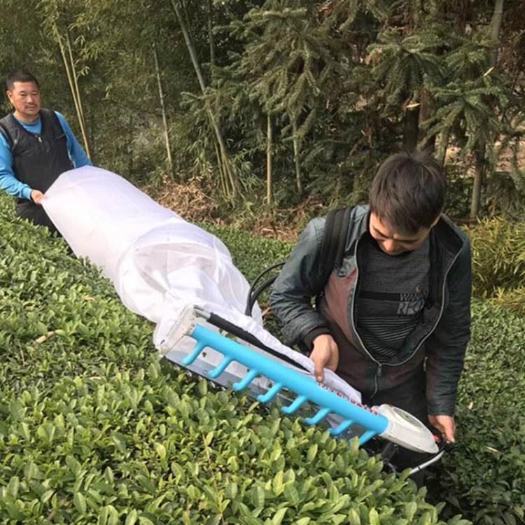 程煤茶叶采摘机  双人采茶机厂家供货  动无刷茶叶采摘机