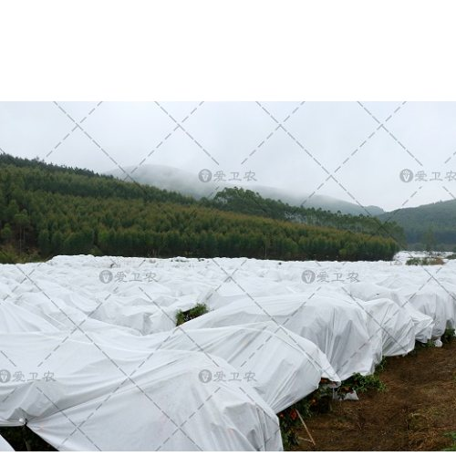 柑桔留树保鲜防寒布代理商 爱卫农 苗木防寒布企业