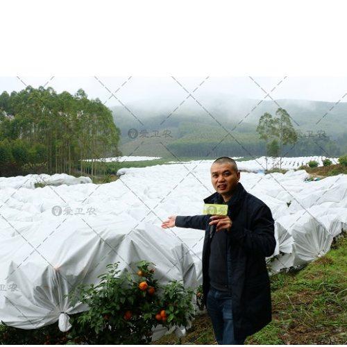 沙糖桔果树防冻布生产商 爱卫农 盆景防冻布
