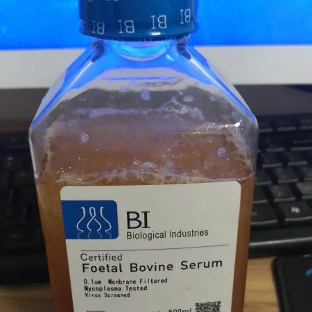 BI原装进口胎牛血清,货号:04-102-1ACS/500ml