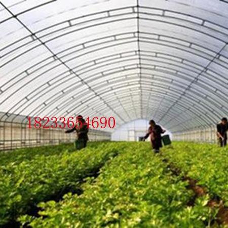 大棚 GP832 钢管大棚 单体大棚 蔬菜大棚 花卉大棚 大棚骨架