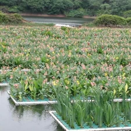 蔬菜浮板 水上种植浮床 净化水质绿化浮岛