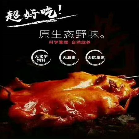 巴马香猪价格 小香猪养殖场 散养香猪养殖包邮 山东香猪肉的市场行情