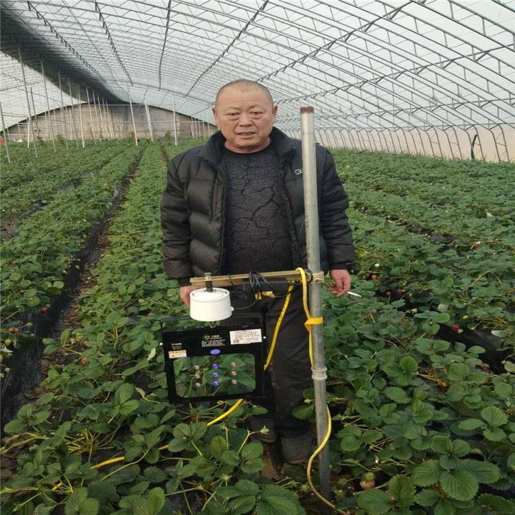 厂家直销草莓补光灯  生长灯 草莓上市时间15天  一亩地只须一个灯 安装简单 智能化控制  效果好