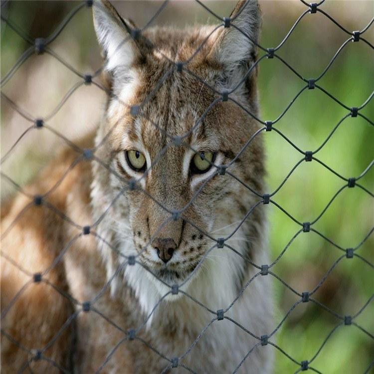 工厂生产动物园笼舍网 绿色包塑网