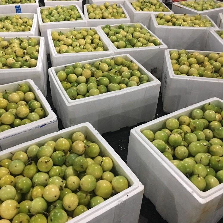 泰国红宝石柚苗  泰国蜜柚价格  正宗红宝石青柚苗基地