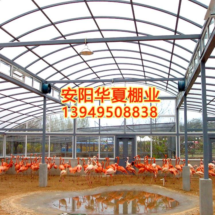 厂家直销温室养殖大棚 养殖大棚长期供应
