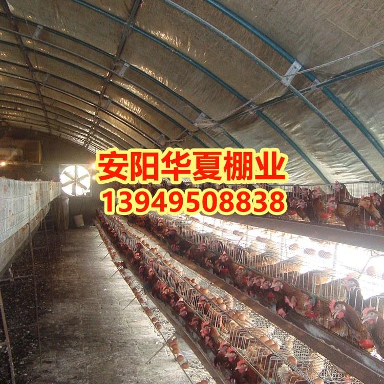 建设养鸡大棚和养猪大棚厂家安阳华夏农业为您报价