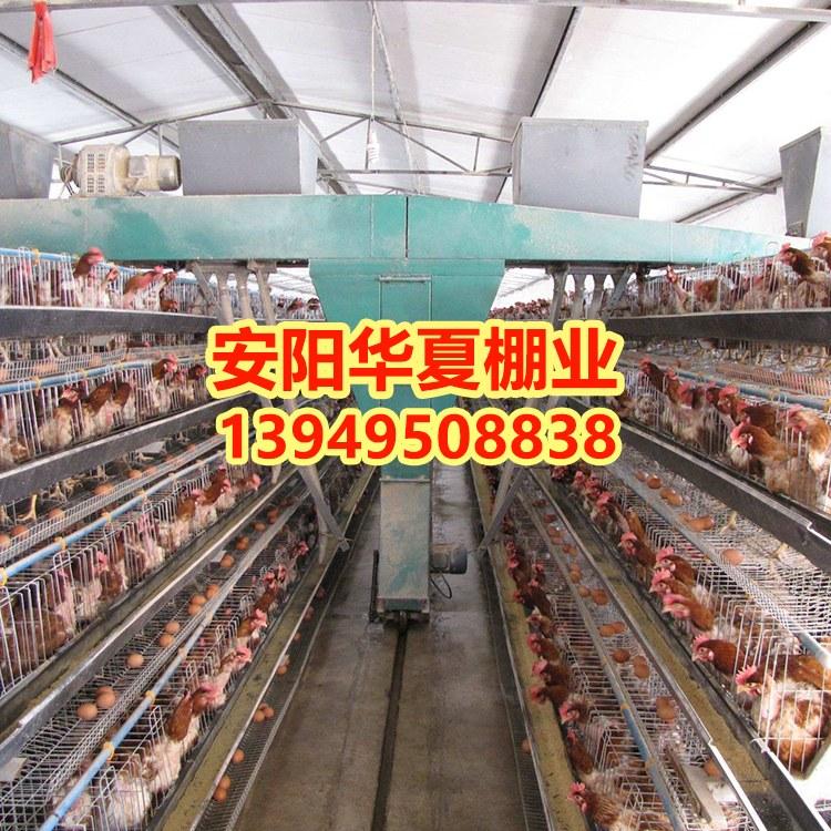 养鸡大棚建造安阳华夏农业诚心服务