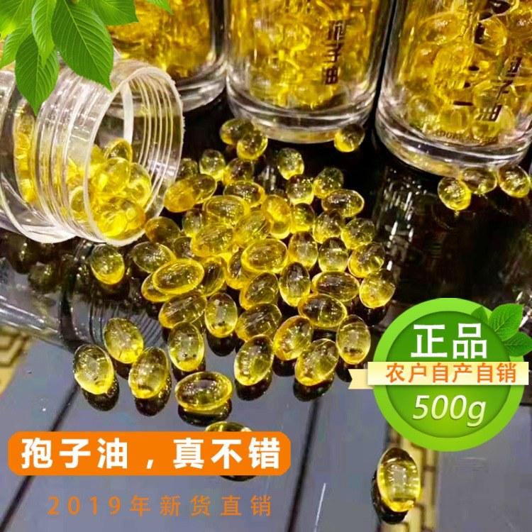 灵芝孢子油  灵芝孢子油胶囊  品质保证