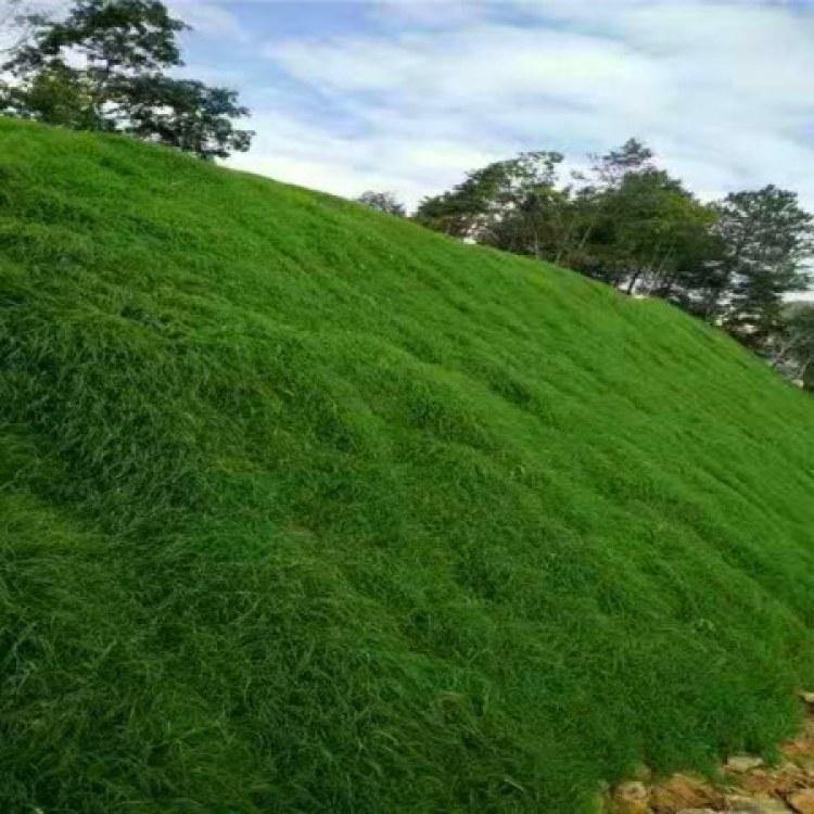 草籽喷播绿化 矿山修复 客土喷播植草 设计 隧道客土喷播