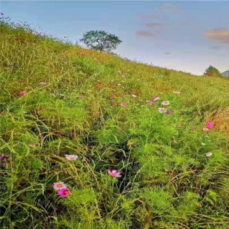 承接客土喷播 哪种好 客土喷播植草 优质 园林绿化