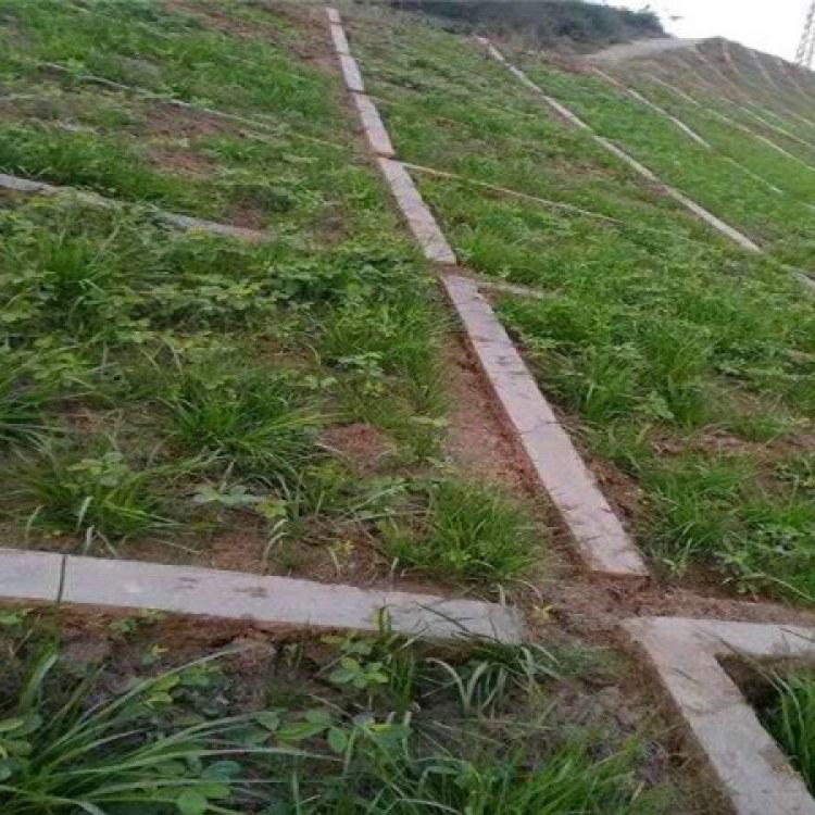 佳航 客土喷播绿植草籽 边坡防护客土喷播 矿山复绿 荒山治理绿化 报价及时
