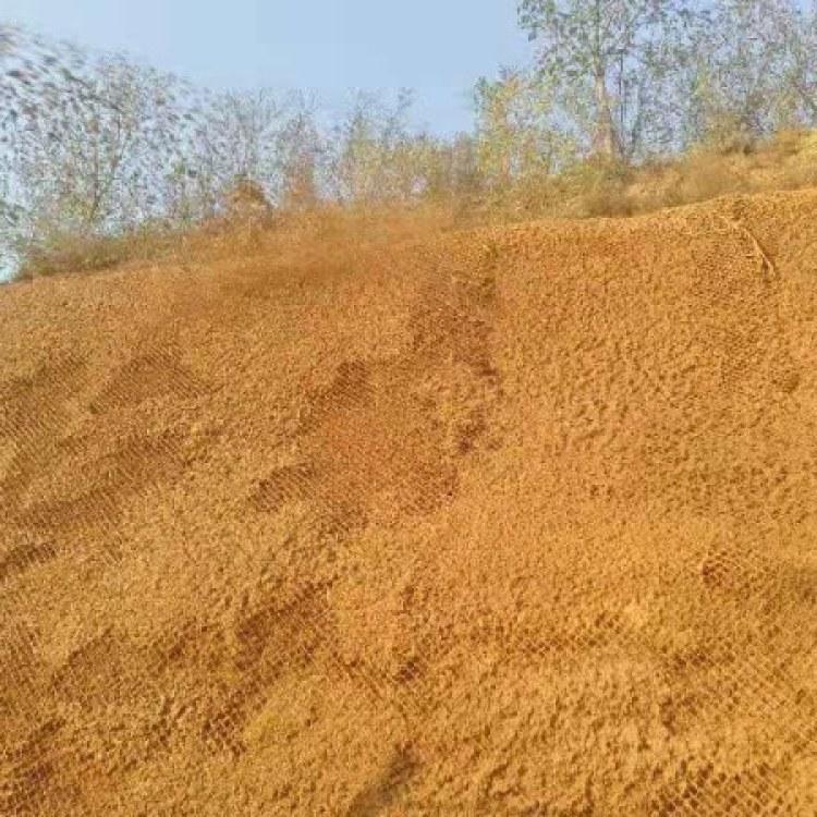 草籽喷播绿化 喷播植草厂家 优质 山体种植 隧道植草绿化