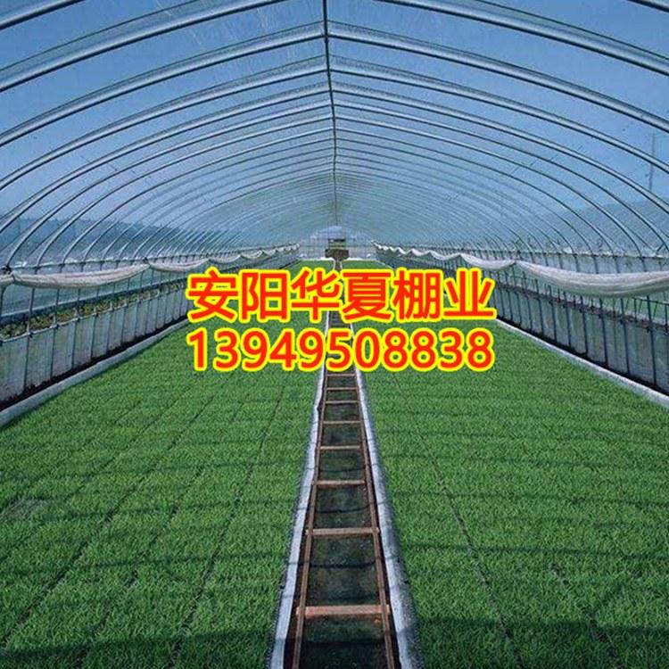 河南蔬菜大棚专业建设 蔬菜大棚厂家