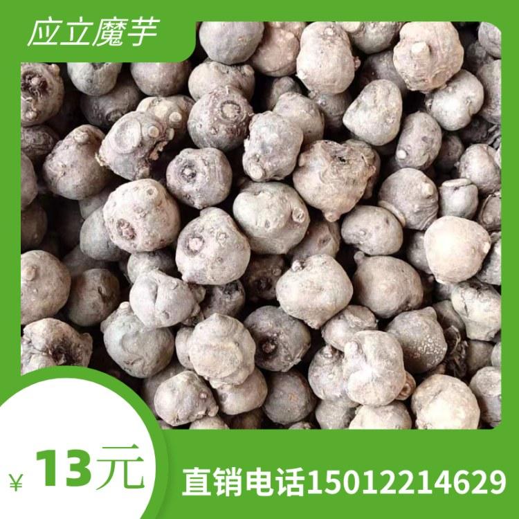 基地直销 魔芋种子培植 魔芋种子批发 优质优量 厂家直销