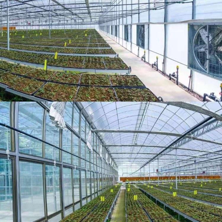 温室玻璃大棚设计 玻璃温室大棚建设  玻璃温室大棚厂商