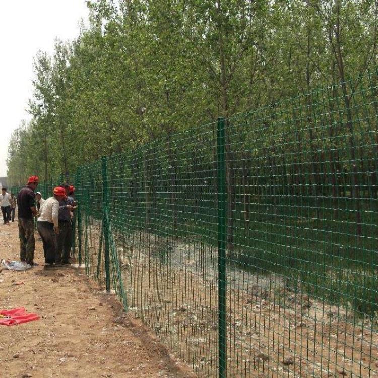 贝纳丰荷兰网铁丝网,养鸡绿色围栏网,浸塑荷兰网,规格齐全 可加工定做