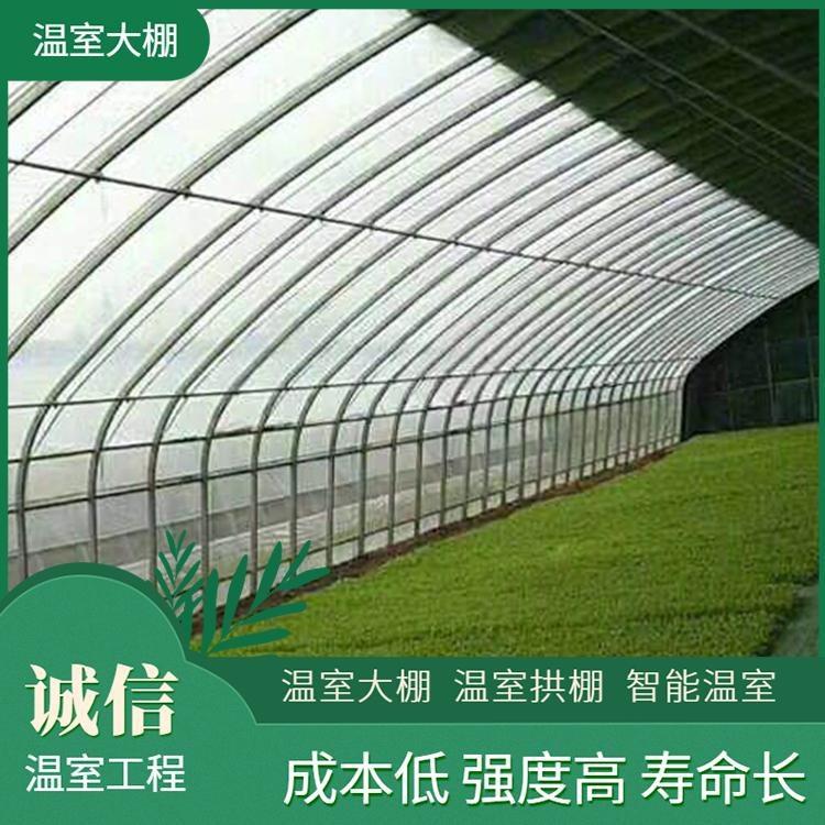 油桃观光采摘园玻璃温室大棚5000平造价