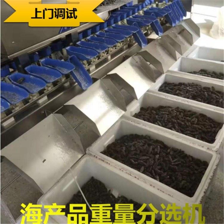 德工 全自动重量分级称-分级称型号 比重分选铜米称-进口分选称