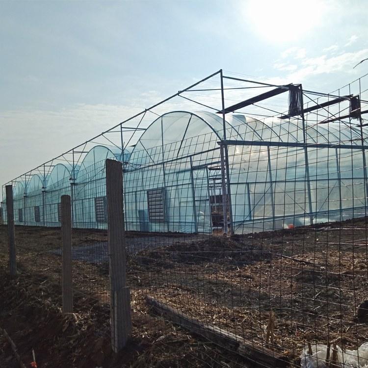 厂家生产阳光板温室 蔬菜种植大棚建设 智能温室造价 以利农业