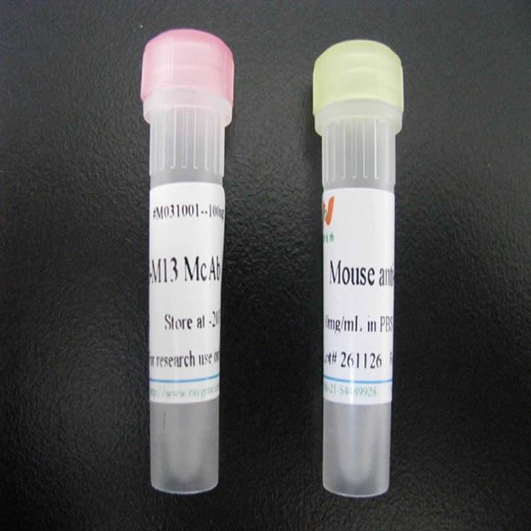 B淋巴细胞白血病前体蛋白转录因子4抗体