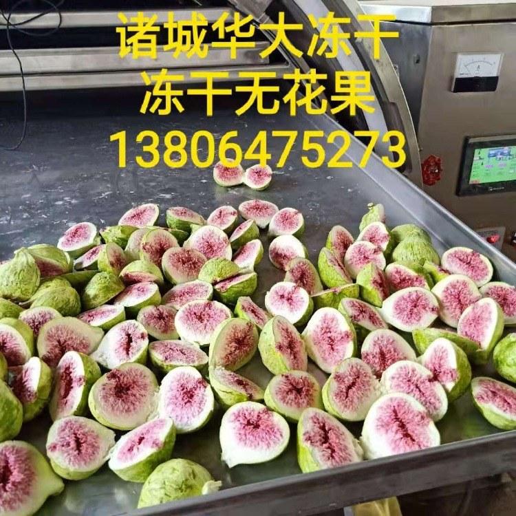 水果真空冻干机 果蔬真空冷冻干燥机 冻干机操作流程