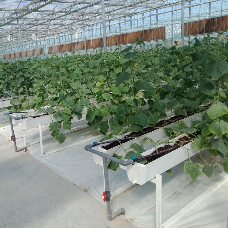 以利农业 厂家直销智能温室 薄膜智能温室大棚工程 简易连栋农用大棚
