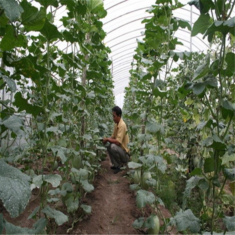 重慶墊江縣哪里有遮陽網 大棚膜 地膜批發市場電話