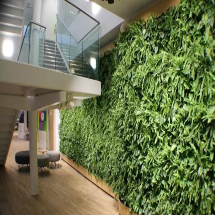 圣恩园艺 无锡植物墙 室立体绿化墙 绿化墙养护