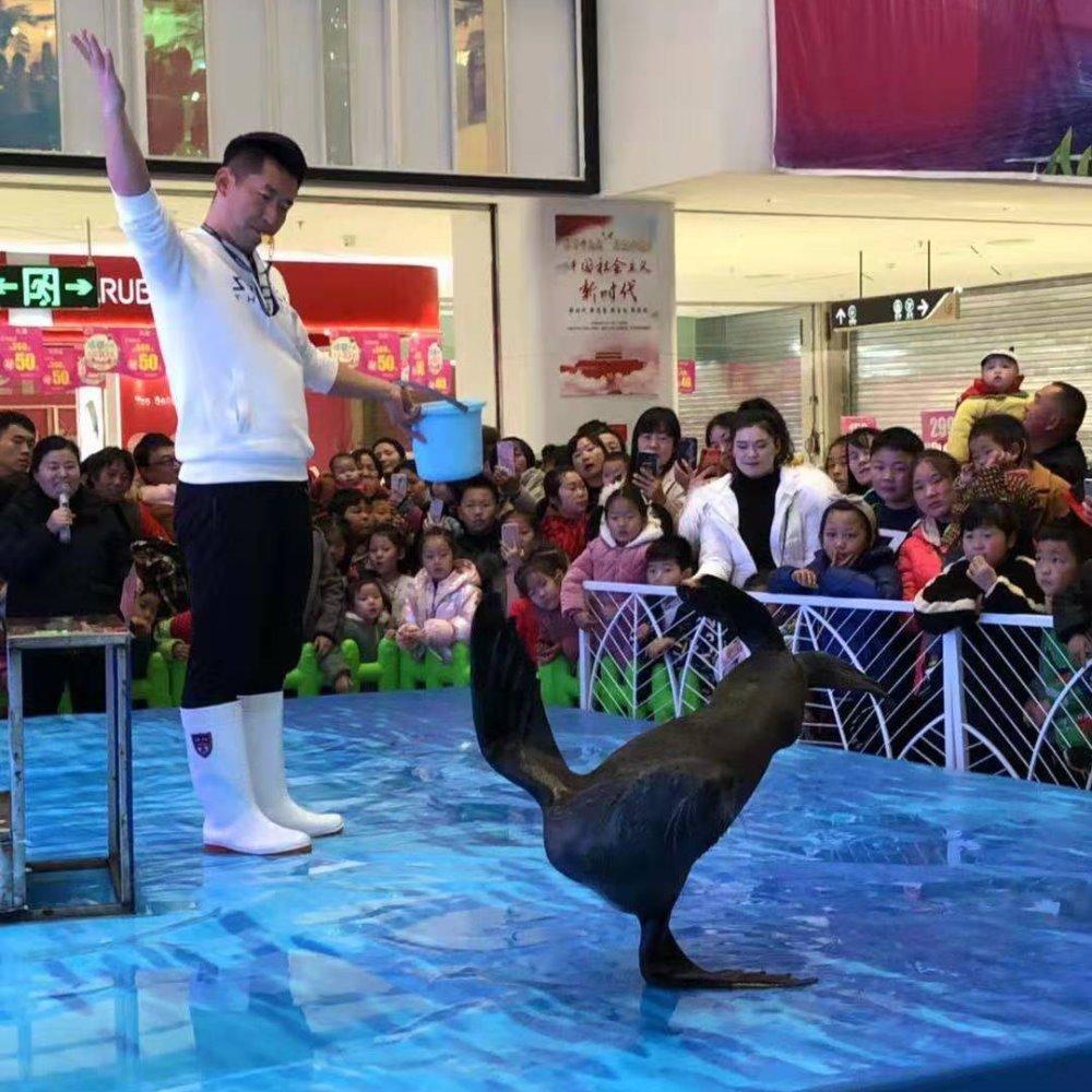 海狮表演 元旦海狮表演出租 暖场活动