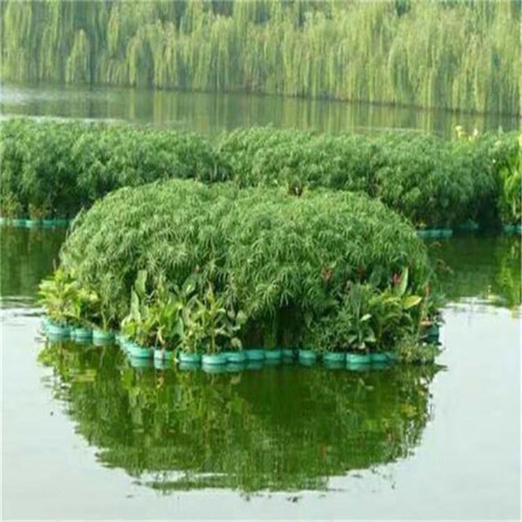 人工浮岛-生态浮岛价格-种植厂家
