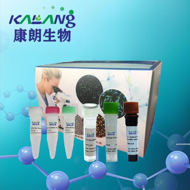 染料法荧光定量LAMP试剂盒/KLANG
