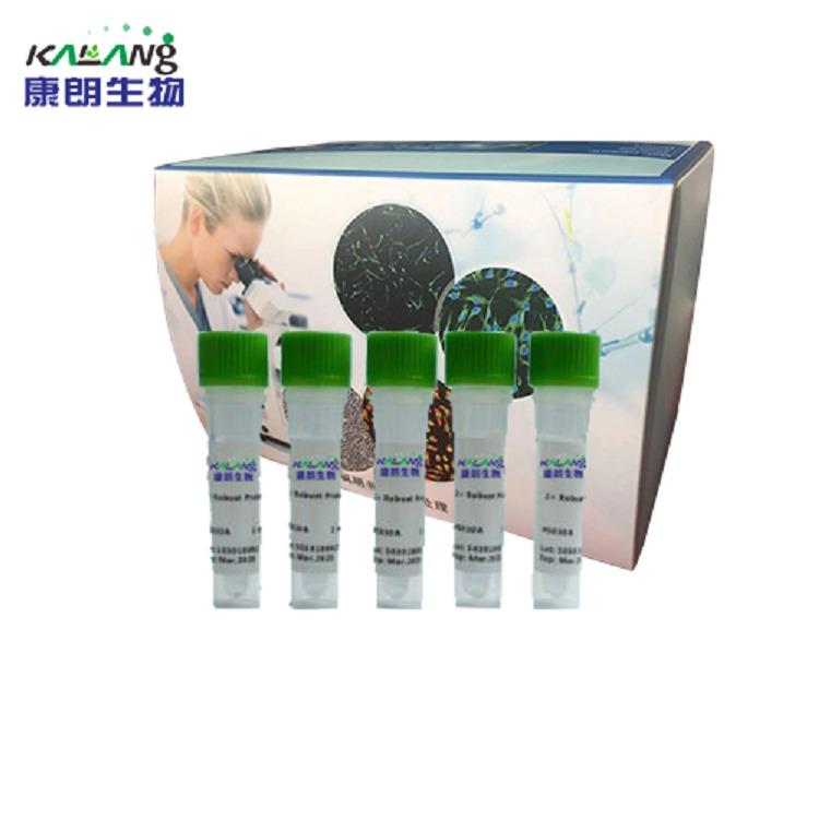 一步式染料法qRT-PCR试剂盒/KLANG