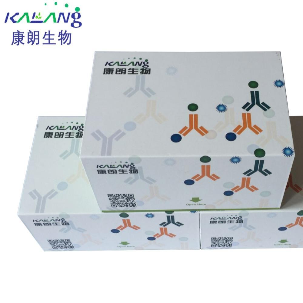 2XLAMP MagicMix-原通用型LAMP试剂盒-含示踪染料/KLANG