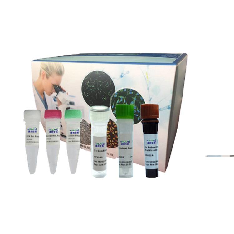 单细胞裂解液(DNA实验用)/KLANG