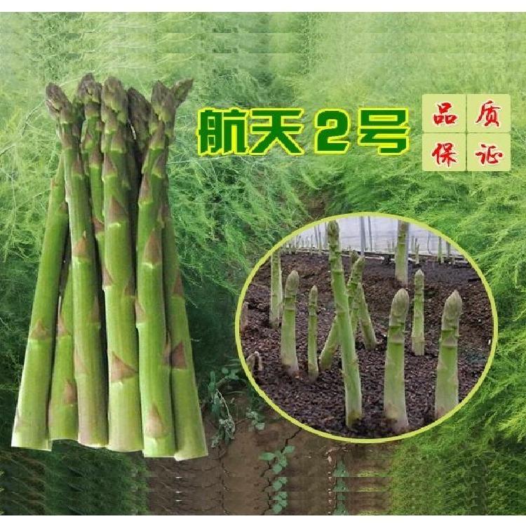国产芦笋种子 航天2号 芦笋种子新品种