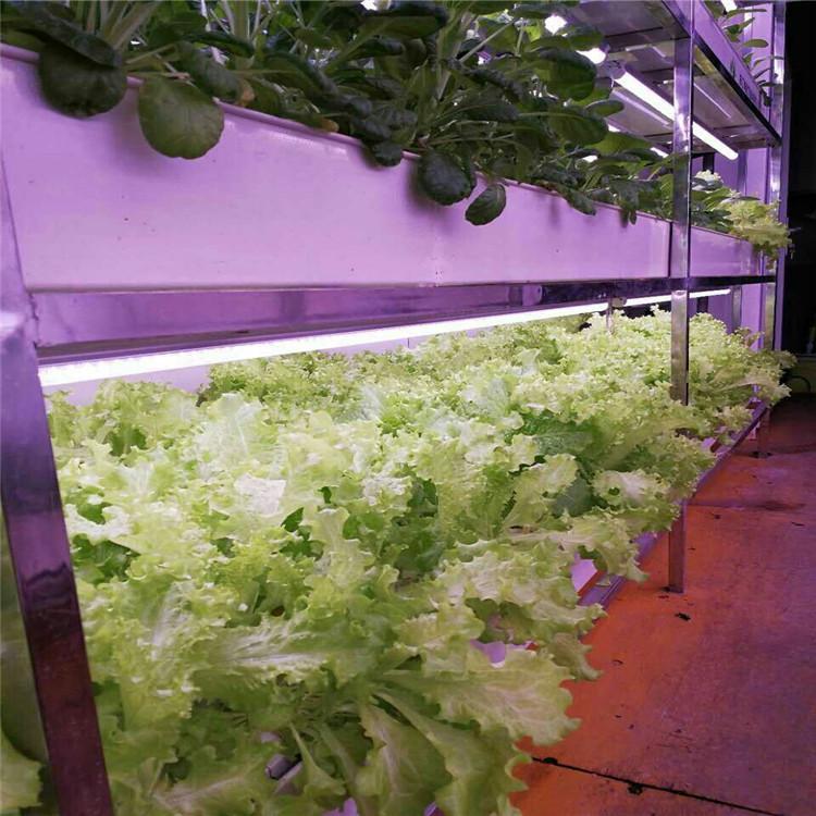 洛阳立体农业厂家设计各种温室大棚定制策划无土栽培蔬菜营养液智慧农业