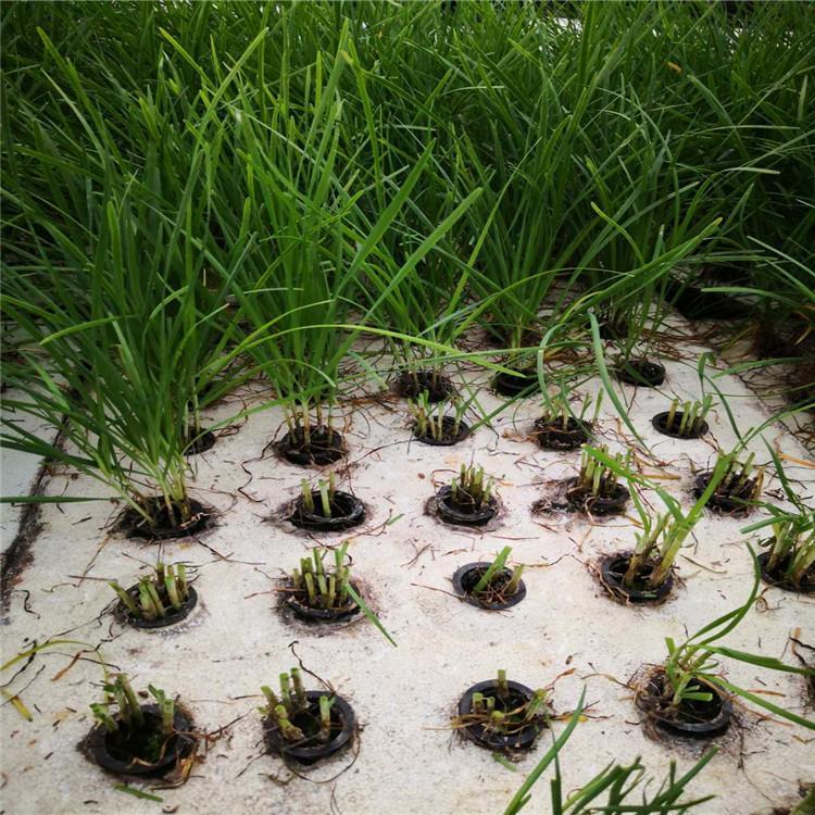 厦门立体农业厂家设计各种温室大棚定制策划无土栽培蔬菜营养液智能种植