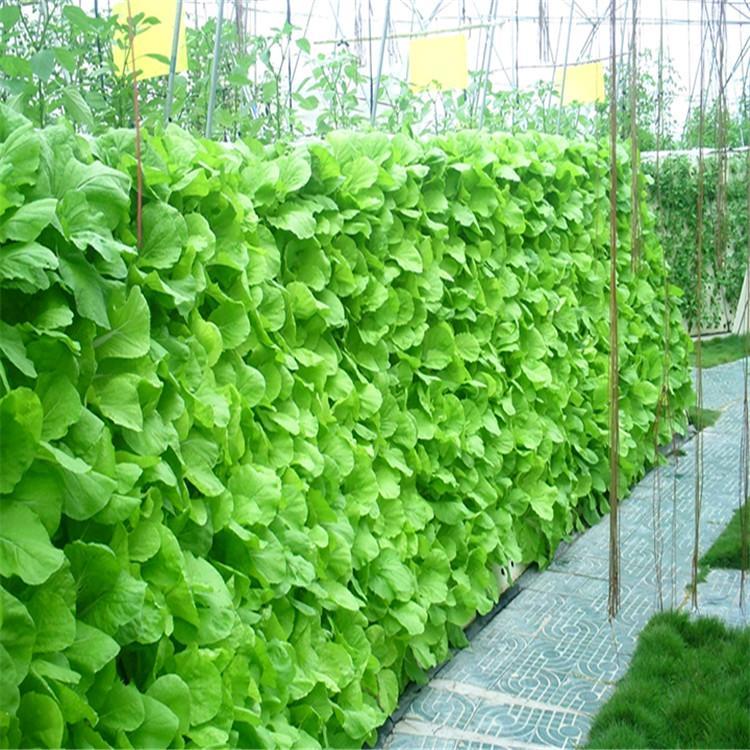 拉萨立体农业厂家设计各种温室大棚定制策划阳台无土栽培技术视频智慧农业