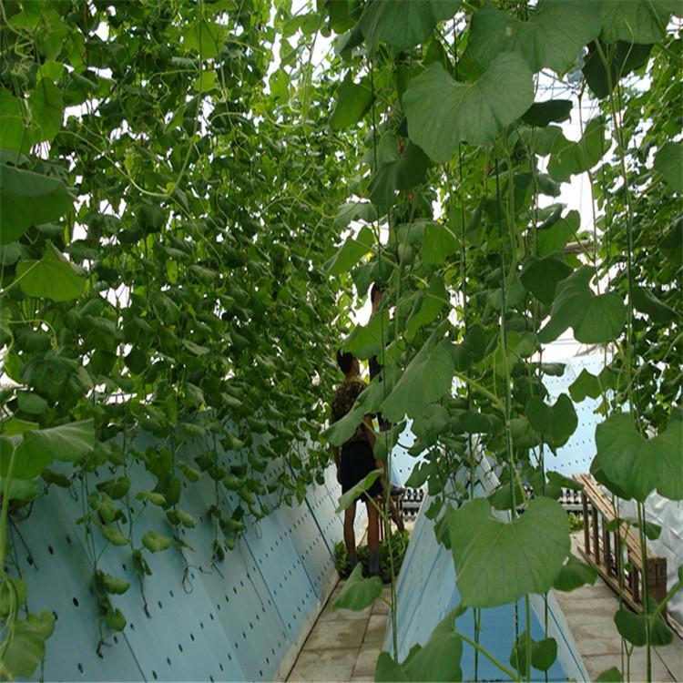 四平立体农业厂家设计各种温室大棚定制策划无土栽培蔬菜加盟温控大棚