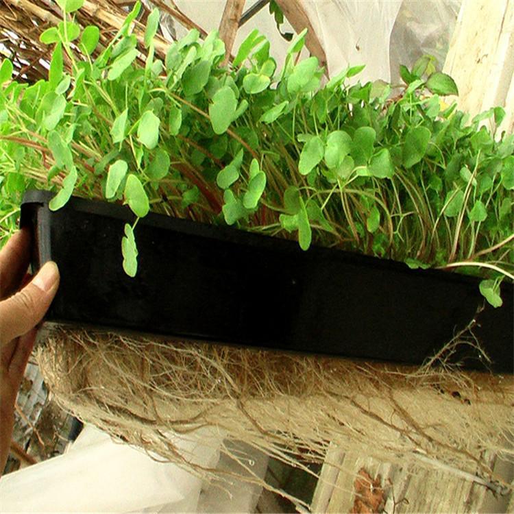 海东立体农业厂家设计各种温室大棚定制策划草莓无土栽培技术视频智慧农业
