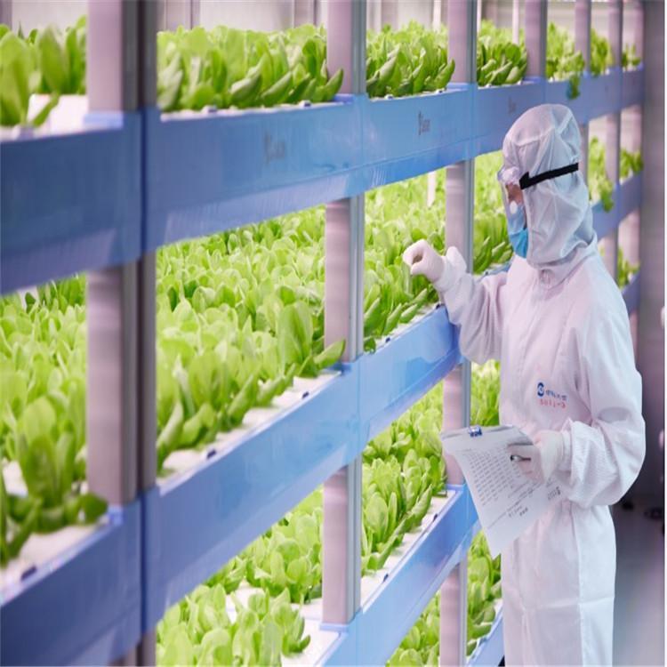 白银立体农业厂家设计各种温室大棚定制策划草莓无土栽培图片温控大棚
