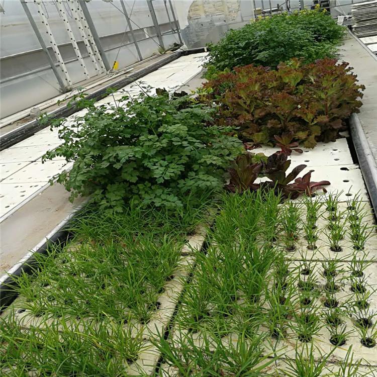 濮阳立体农业厂家设计各种温室大棚定制策划自制无土栽培设备温控大棚