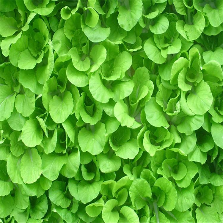 日照立体农业厂家设计各种温室大棚定制策划无土栽培技术原理温控大棚