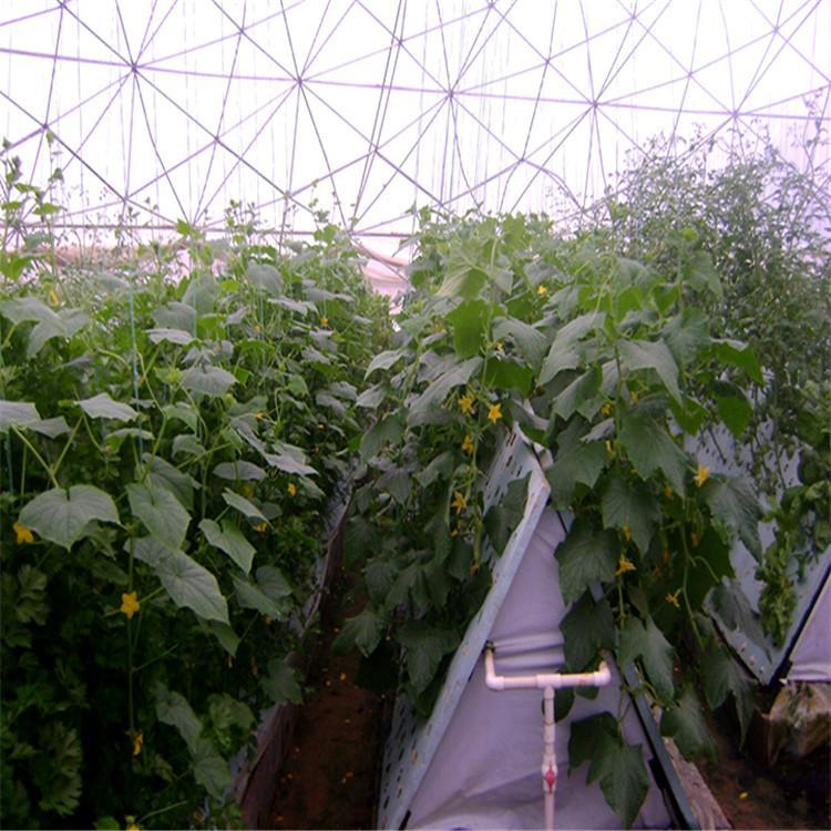 哈尔滨立体农业厂家设计各种温室大棚定制策划花卉无土栽培图片温控大棚