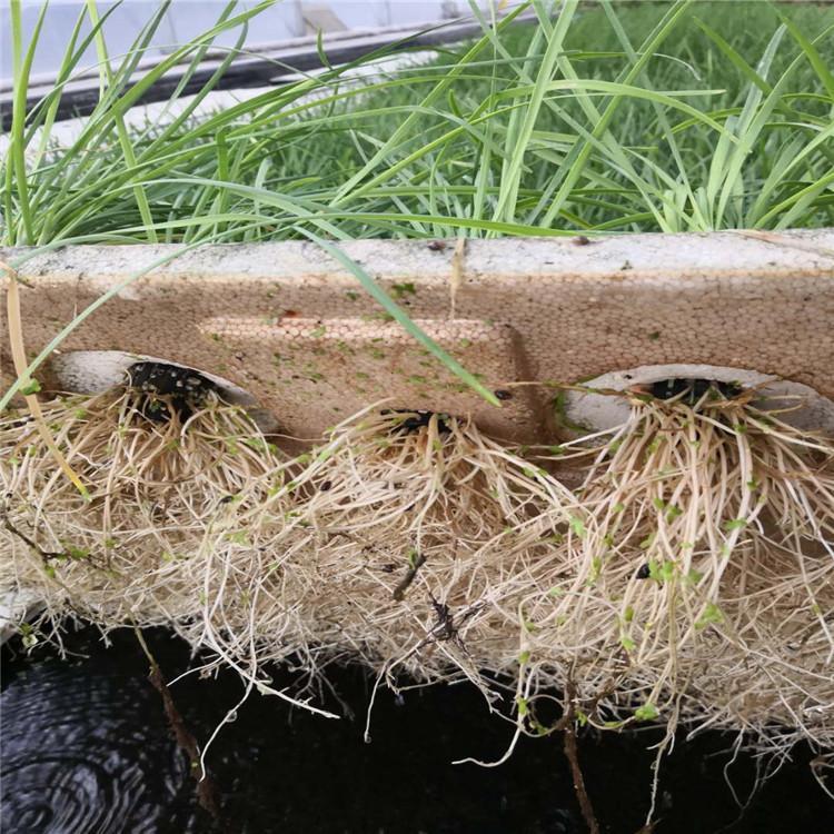 防城港立体农业厂家设计各种温室大棚定制策划无土栽培营养液配方大全智能种植