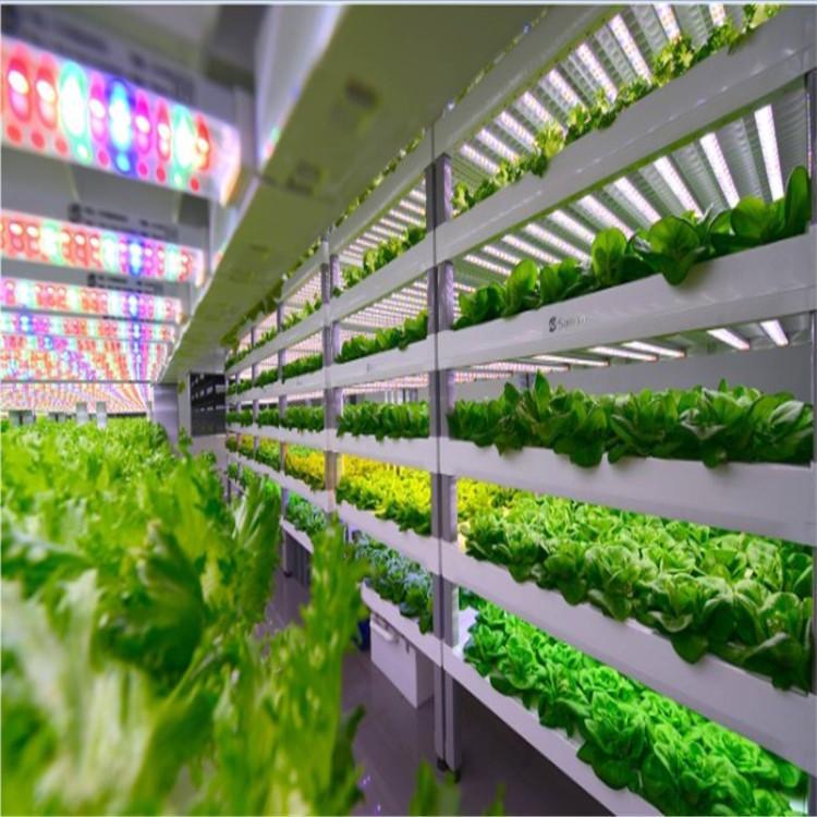 百色立体农业厂家设计各种温室大棚定制策划大棚无土栽培蔬菜技术智能种植