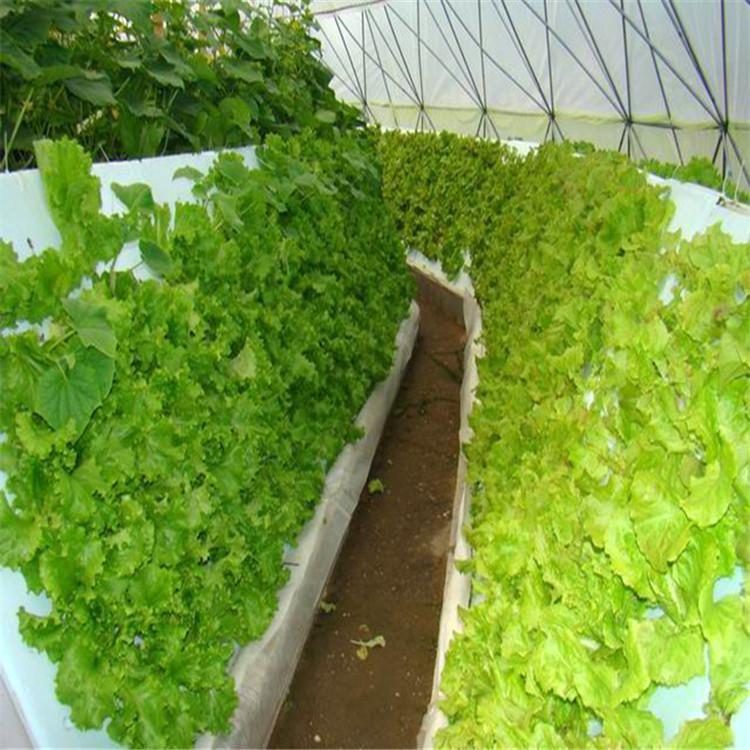 昌都立体农业厂家设计各种温室大棚定制策划无土栽培设备价格智慧农业