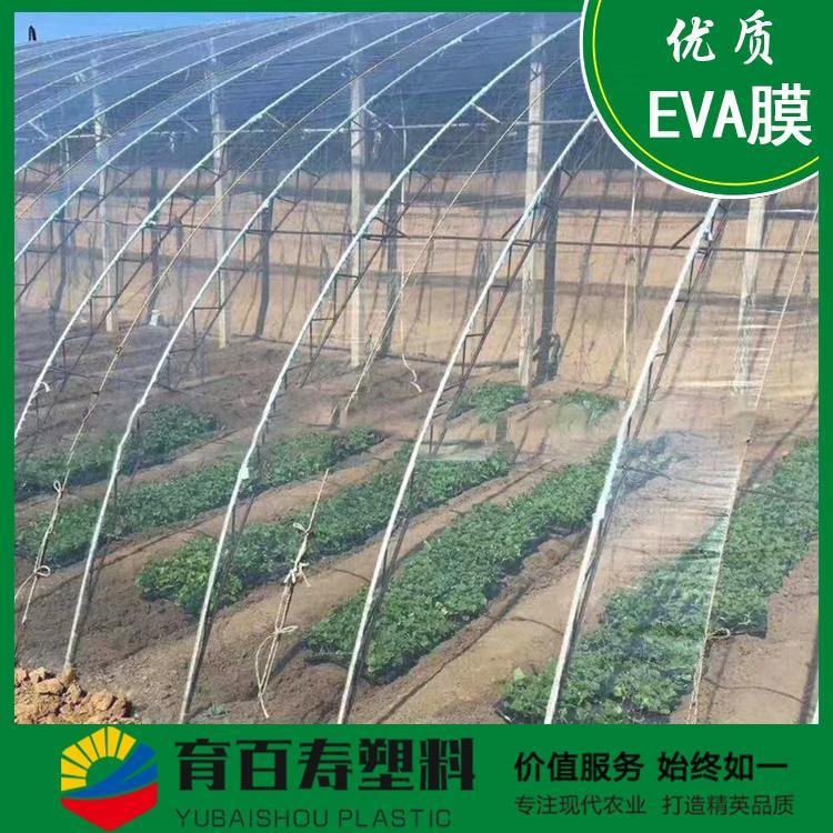 育百寿牌农膜 EVA长寿无滴膜 保温 可按客需定制
